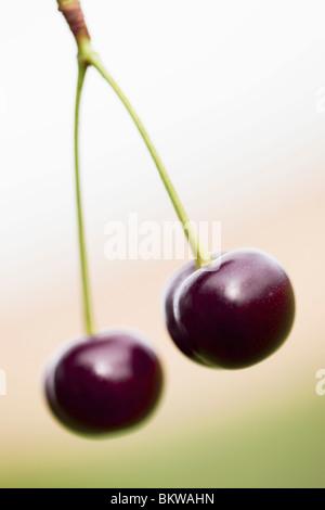 Coppia di ciliegie Foto Stock
