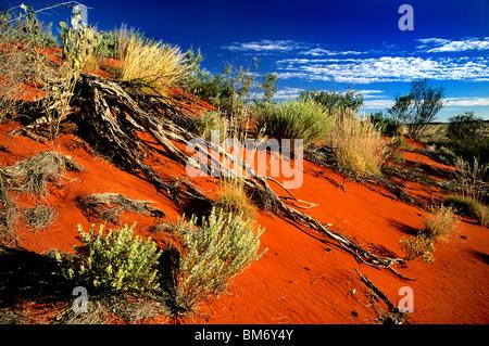 Un vividamente colorate dune di sabbia nella regione di Pilbara e paesaggio del Western Australia, vicino alla città Foto Stock
