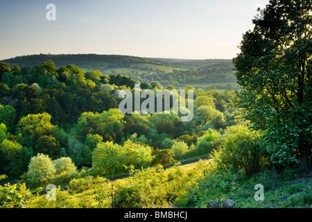 Box Hill a zig-zag, Surrey, Regno Unito. La molla Foto Stock