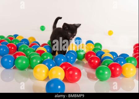 Carino gattino nero gioca con le sfere colorate Foto Stock