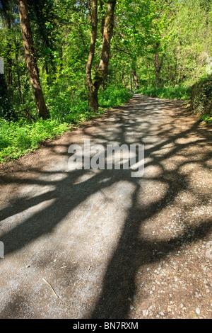 Bosco a piedi con le ombre degli alberi sul percorso, frondosi pezzata luce Foto Stock