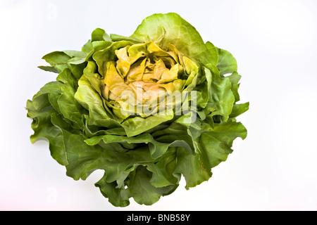 Insalata fresca lattuga isolato su bianco Foto Stock