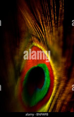 Abstract Peacock feather con occhio Foto Stock
