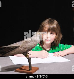 Ragazzo di disegno di un uccello Foto Stock