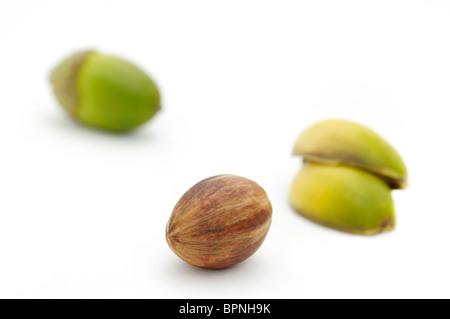Ghiande di quercia di castagno, Quercus prinus o Quercus montana. Una delle ghiande è stata tagliata aperta a rivelare il seme dall'interno.