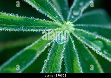 Goccia di rugiada sulla foglia verde Foto Stock