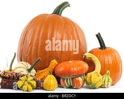 Zucche e zucche ancora vita isolata su sfondo bianco Foto Stock