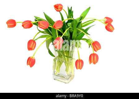 Bouquet di tulipani freschi in vaso isolato Foto Stock