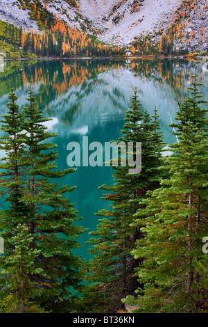 I larici e abeti al Lago Colchuck in Alpine Lakes Wilderness dello stato di Washington Foto Stock