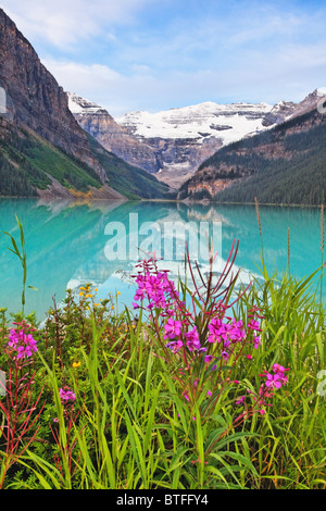 Blooming Fireweed al lago, il Lago Louise, Alberta, Canada Foto Stock
