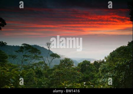 Alba a Cerro Pirre, nel Parco Nazionale del Darién, provincia di Darien, Repubblica di Panama. Foto Stock
