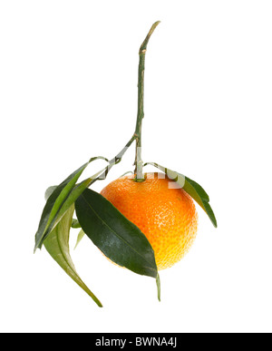 Mandarino con foglie, isolato Foto Stock