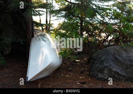 Una canoa sotto gli alberi di pino lungo il litorale.Pinecrest Lago, Tuolumne County, California, Stanislaus National Forest, U.S.A.