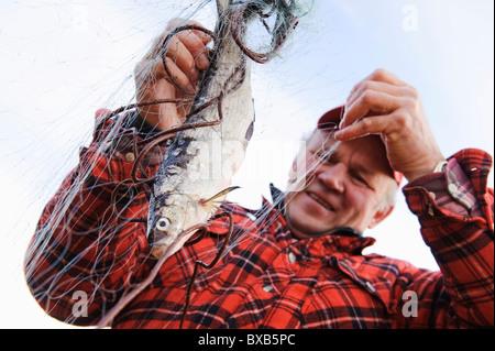 Fisherman tenendo fuori pesce dalla rete da pesca