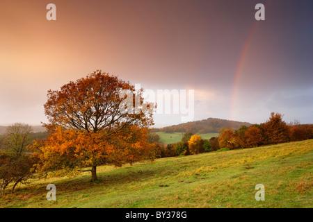 Tonalità autunnali coprire gli alberi e il cielo si riempie di colore dalla Rising Sun come docce a pioggia pass Foto Stock