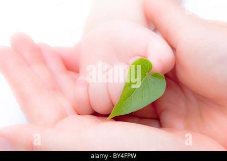 Madre di mani del bambino in mano azienda leaf Foto Stock