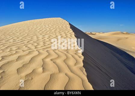 Le dune di sabbia del deserto del Sahara vicino a Douz, Tunisia Foto Stock