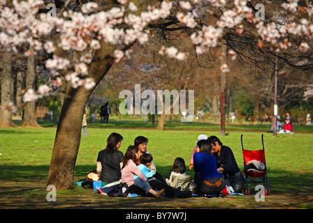 Famiglia seduto avente picnic sotto la fioritura dei ciliegi in Shinjuku Gyoen, Tokyo, Giappone Foto Stock