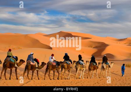 Il tuareg berber l uomo alla guida di un gruppo di turisti sui cammelli attraverso la Erg Chebbi desert con oro dune di sabbia in Marocco