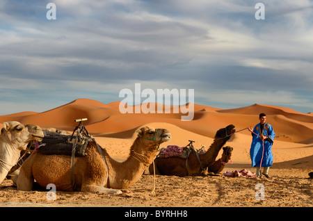 Berber blue man la preparazione di dromedario cammelli per un giro serale in Erg Chebbi Marocco nel deserto