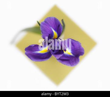 Overhead di Iris Foto Stock