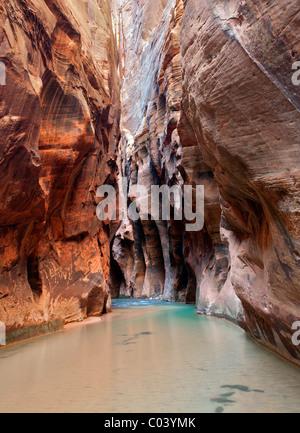 Stream e pareti del canyon. Parco Nazionale di Zion, Utah. Foto Stock