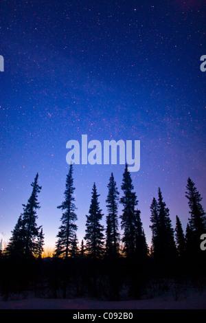 Silhouette di abeti contro un cielo stellato al crepuscolo in ampia Pass, centromeridionale Alaska, inverno Foto Stock