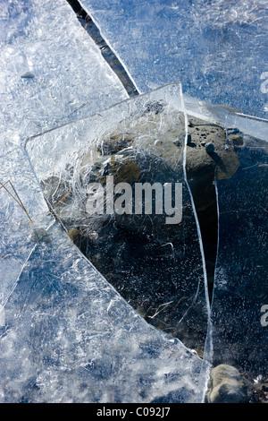 Close up dettaglio dei modelli di ghiaccio in un'acqua di disgelo Congelato stagno causato da un improvviso cambiamento di livello di acqua, Denali Highway, Alaska Foto Stock