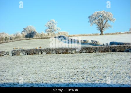 Trasformata per forte gradiente la brina su alberi nei campi Foto Stock