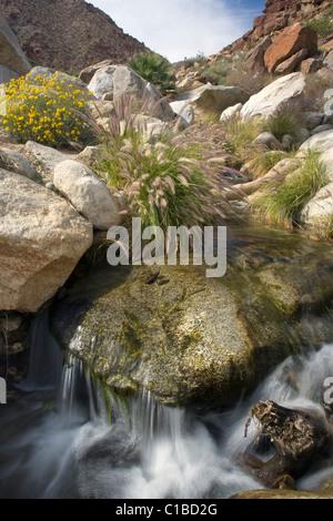 Esecuzione del flusso attraverso il Palm Canyon in Anza Borrego Desert State Park, California. Foto Stock
