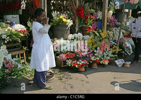 Proprietario in piedi al di fuori del suo mercato di stallo vivacemente colorato visualizza di fiori per la vendita Foto Stock