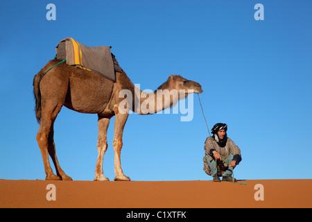 Cammello su Erg Chebbi dune snd sul bordo del deserto del Sahara Foto Stock
