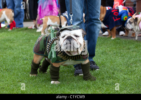 "Bizzarro insolito cane divertente ""fancy dress' Foto Stock"