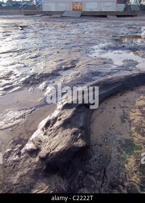 Il legno da alberi risalente all\'ultima glaciazione esposta da ...