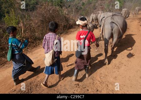 I bambini che portano i loro bufali al campo. Villaggio Mindayik. A sud dello Stato di Shan. Myanmar Foto Stock