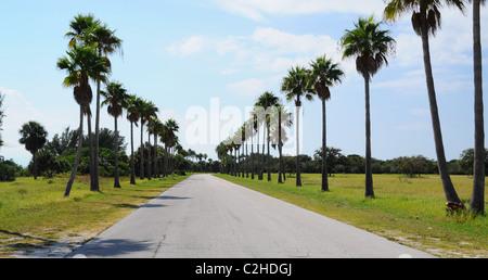 Le palme allineate al lato della strada nella Florida Centrale Foto Stock
