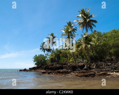 Palme sulla isola di Boipeba, Bahia, Brasile Foto Stock