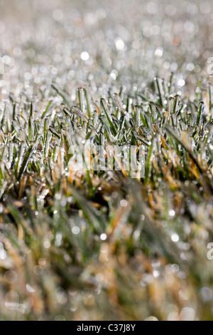 Close-up fotografia macro di brina sull'erba Foto Stock