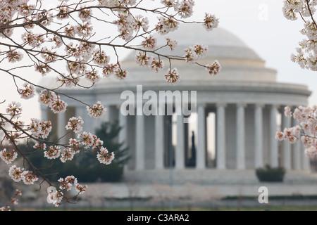 Il Jefferson Memorial incorniciato da fiori di ciliegio durante il 2011 National Cherry Blossom Festival in Washington, Foto Stock