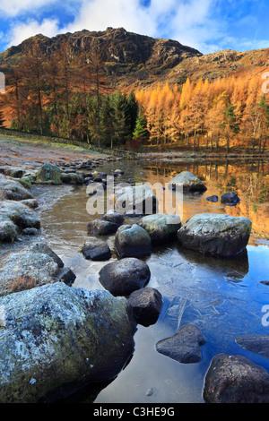 Il tardo autunno linee di ghiaccio le sponde rocciose di Blea Tarn davanti a Blake Rigg Foto Stock