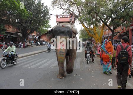 Elephant a piedi giù per la strada Foto Stock