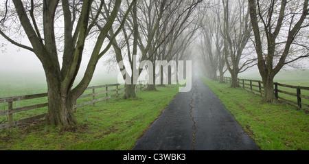 Un viale alberato Vicolo del paese su un precoce nebbiosa mattina di primavera, Southwestern Ohio, Stati Uniti d'America Foto Stock