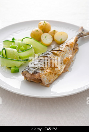 Sgombri con cetrioli e patate su piastra, close-up Foto Stock