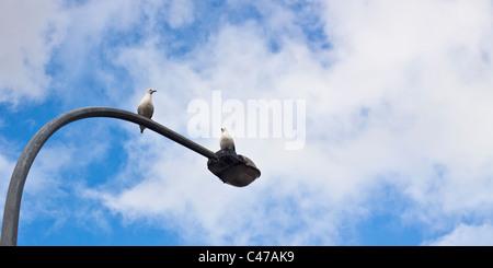 Due Gabbiani seduti su un lampione e blu cielo nuvoloso. Foto Stock