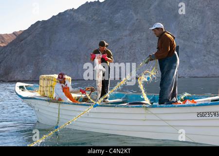 Gill net pescatori tirare le loro catture tra cui un squalo martello in Kino Bay, Messico. Foto Stock