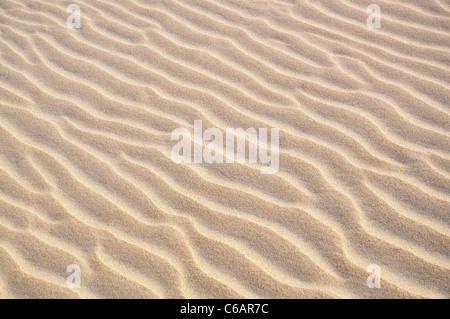 Bellissimi modelli di onda trovati in una duna di sabbia nel deserto Foto Stock