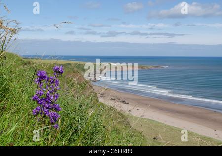 San Ciro Spiaggia Riserva Naturale Nazionale con fiori selvatici e operazioni automatiche di fine campo dal vecchio Foto Stock
