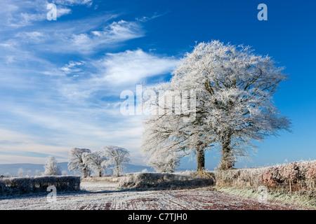 Trasformata per forte gradiente smerigliati terreni coltivati e alberi in inverno, prua, metà Devon, Inghilterra. Inverno (dicembre 2010). Foto Stock