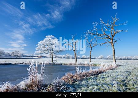 Trasformata per forte gradiente smerigliati alberi e lago ghiacciato in inverno, Morchard Road, metà Devon, Inghilterra. Foto Stock
