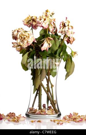 Bouquet di rose appassite in vetro o cristallo vaso.